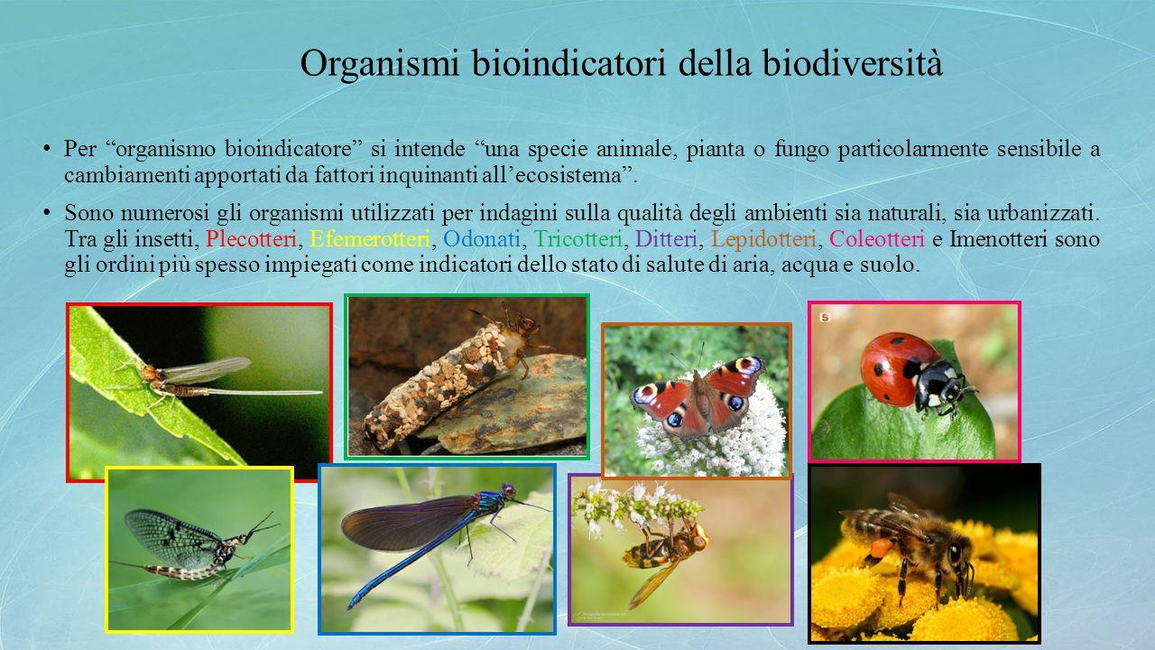 Organismi bioindicatori della biodiversità