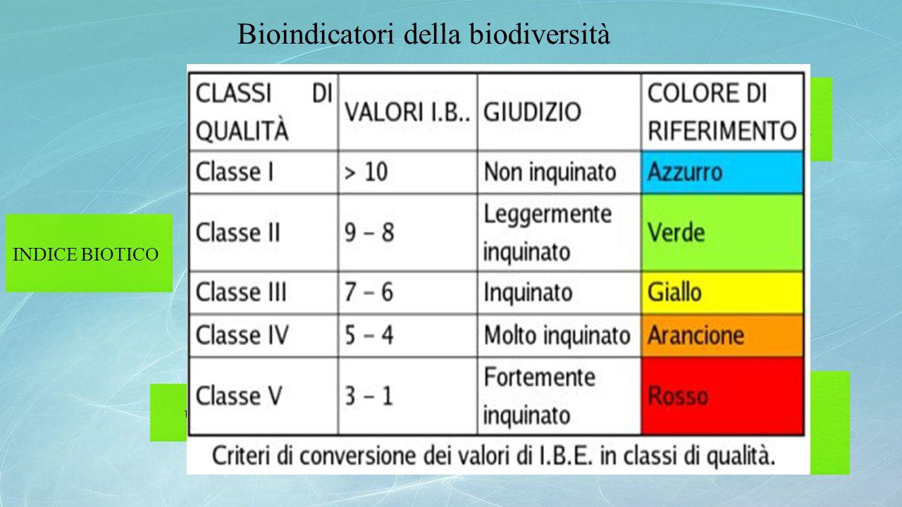 Bioindicatori della biodiversità