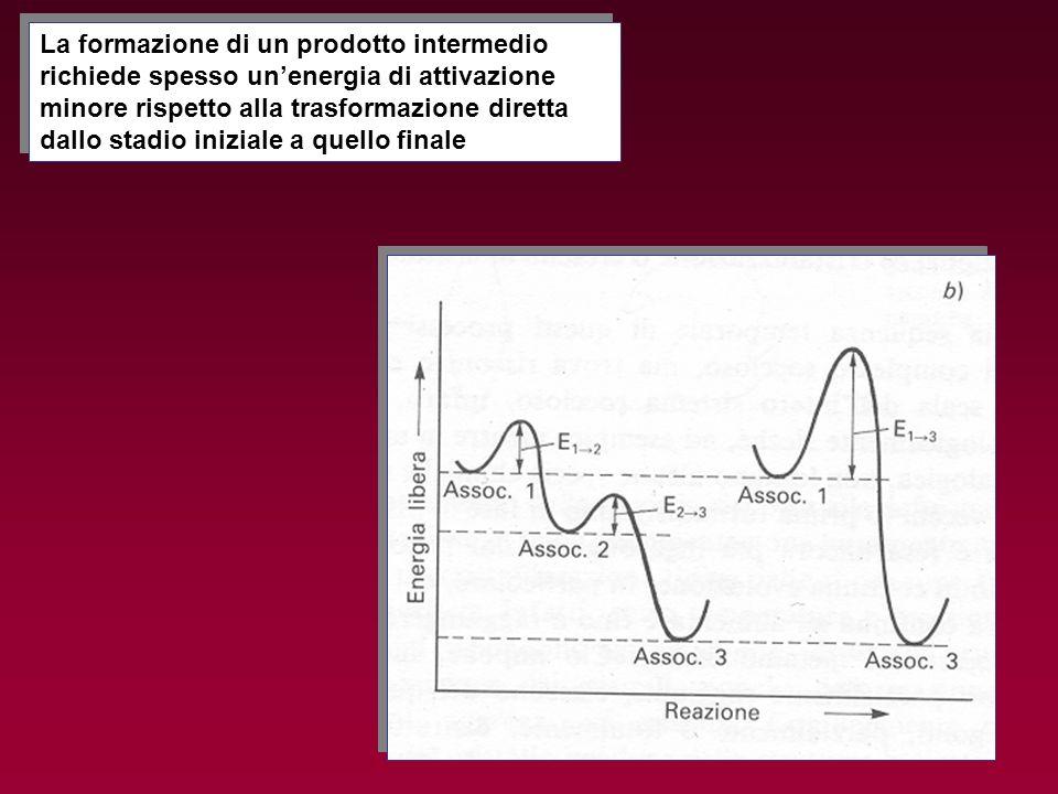 La formazione di un prodotto intermedio richiede spesso un'energia di attivazione minore rispetto alla trasformazione diretta dallo stadio iniziale a quello finale