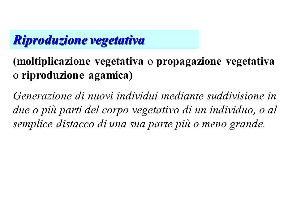 Riproduzione vegetativa