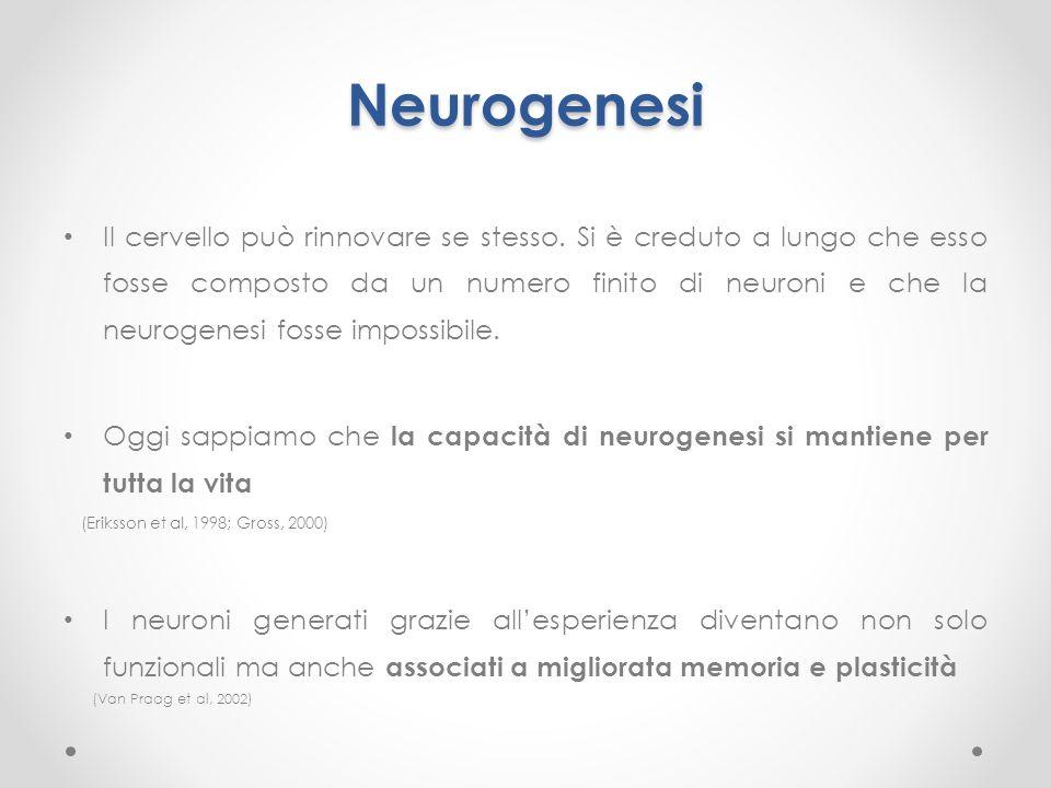Neurogenesi