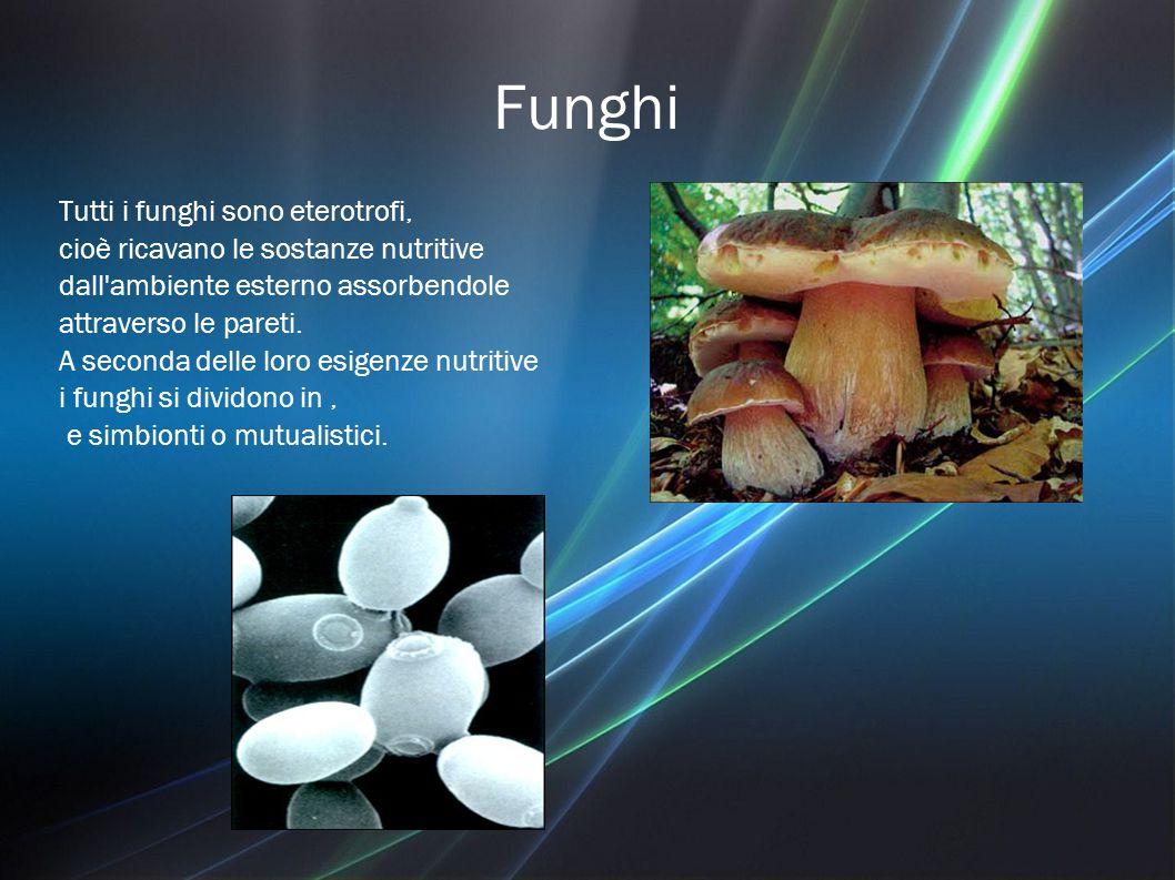 Funghi Tutti i funghi sono eterotrofi,