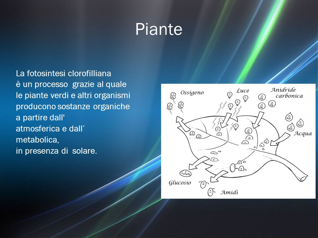 Piante La fotosintesi clorofilliana è un processo grazie al quale