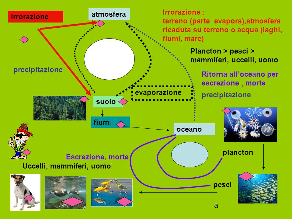 Irrorazione : terreno (parte evapora),atmosfera ricaduta su terreno o acqua (laghi, fiumi, mare)