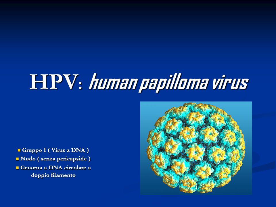HPV: human papilloma virus