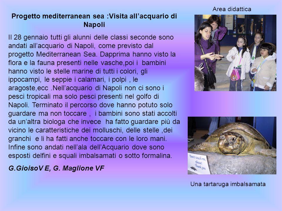 Progetto mediterranean sea :Visita all'acquario di Napoli