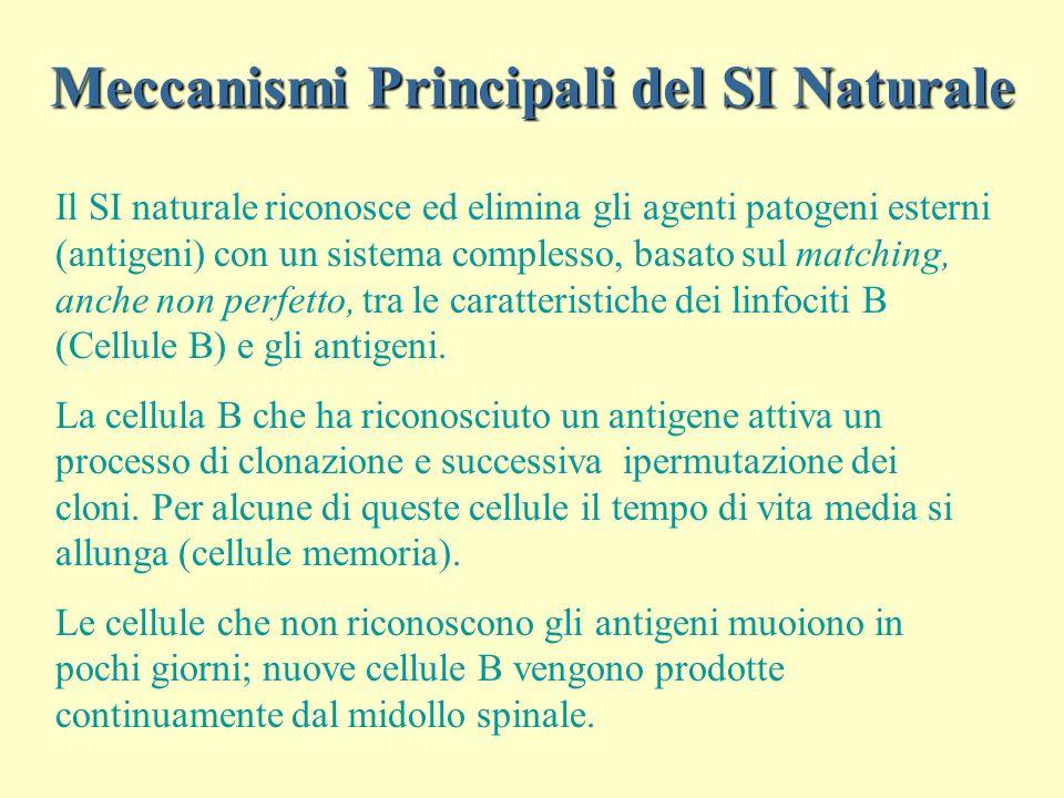 Meccanismi Principali del SI Naturale