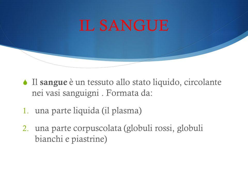 IL SANGUE Il sangue è un tessuto allo stato liquido, circolante nei vasi sanguigni . Formata da: una parte liquida (il plasma)