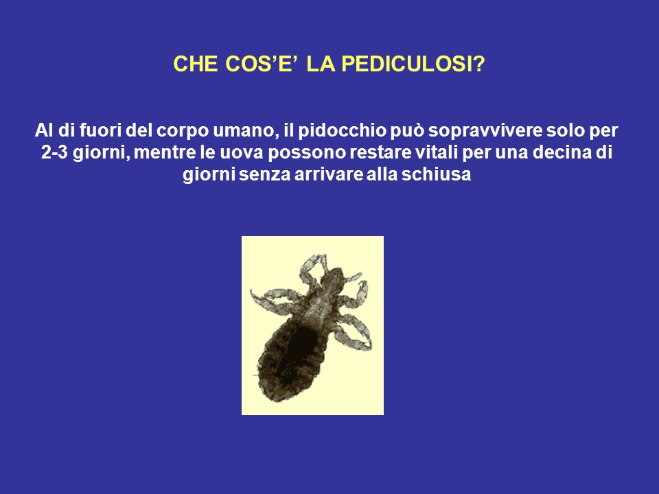 CHE COS'E' LA PEDICULOSI