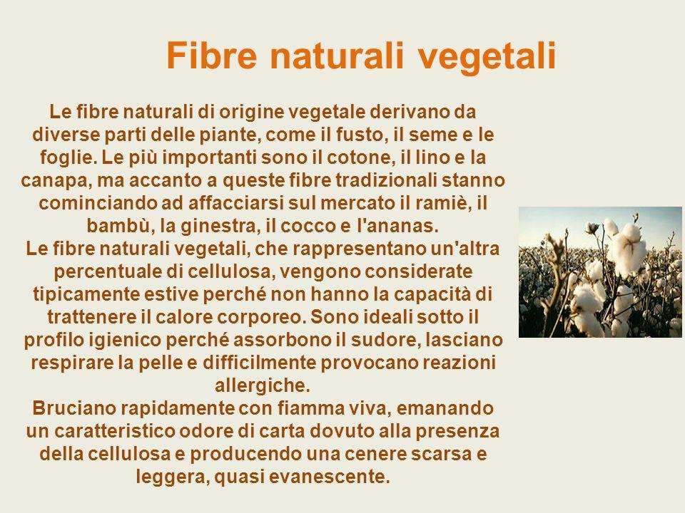 Fibre naturali vegetali