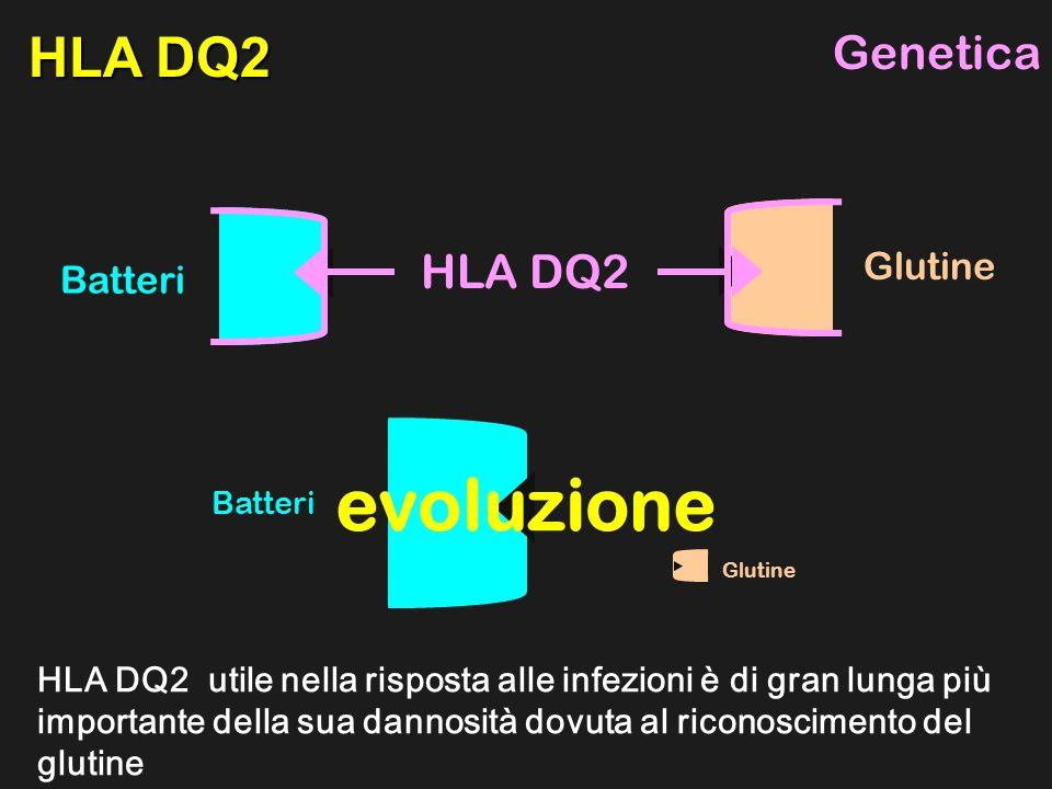 evoluzione HLA DQ2 Genetica HLA DQ2 Glutine Batteri