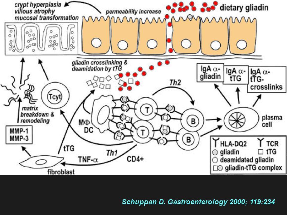 Schuppan D. Gastroenterology 2000; 119:234