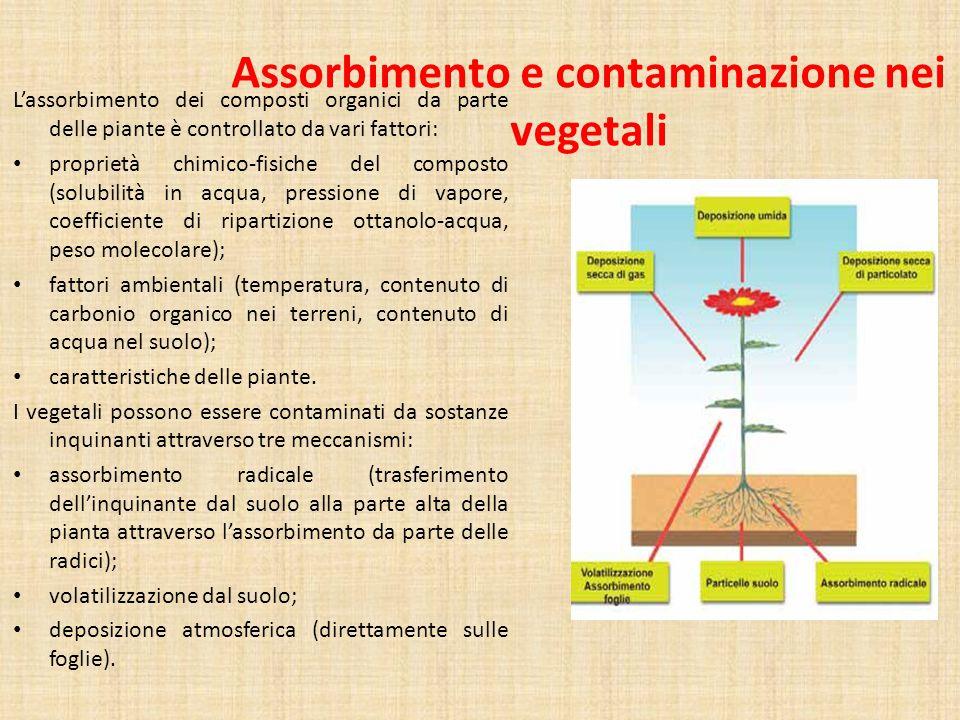 Assorbimento e contaminazione nei vegetali
