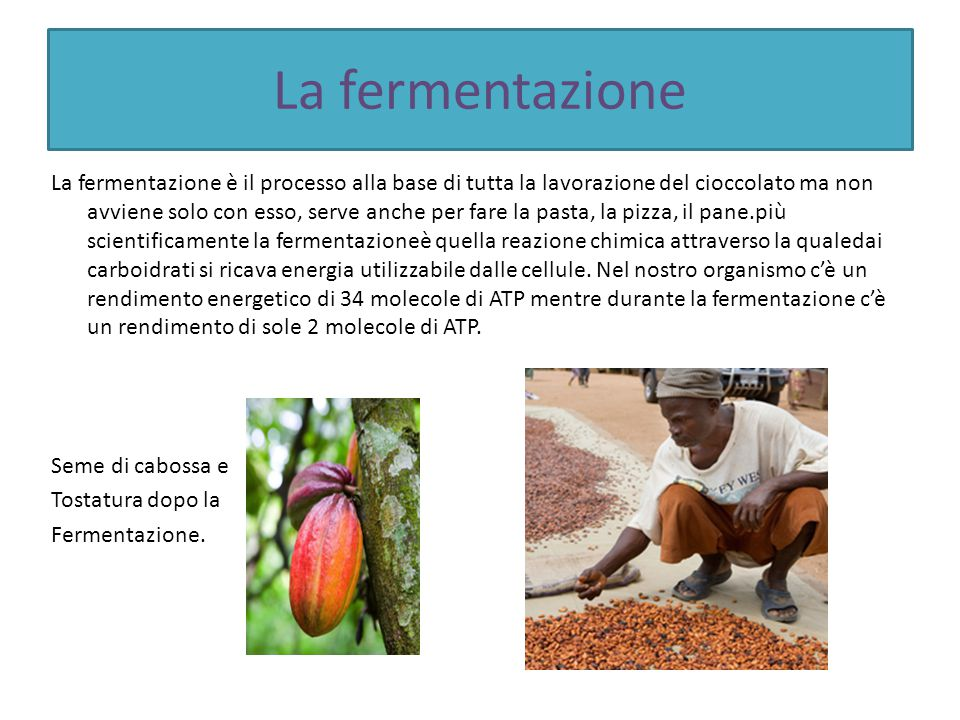 La fermentazione
