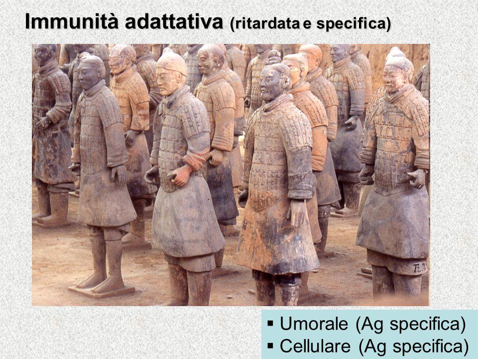 Immunità adattativa (ritardata e specifica)