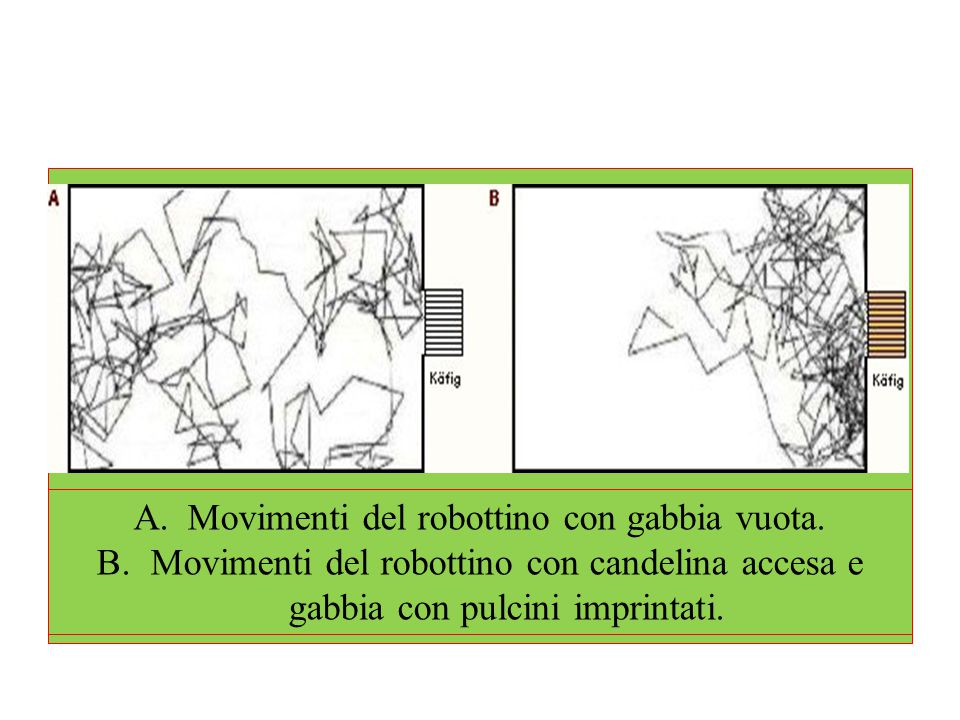 Movimenti del robottino con gabbia vuota.