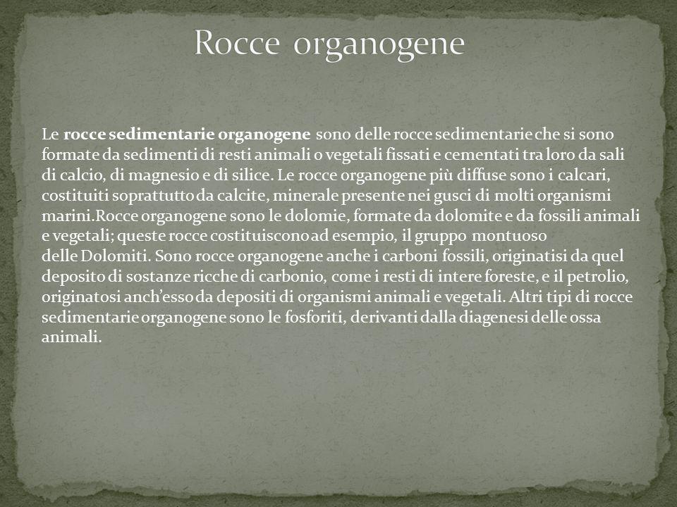 Rocce organogene