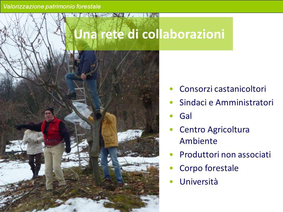 Una rete di collaborazioni