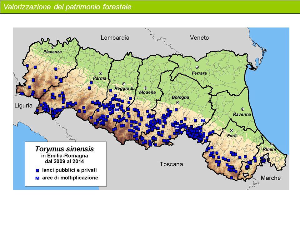 Valorizzazione del patrimonio forestale
