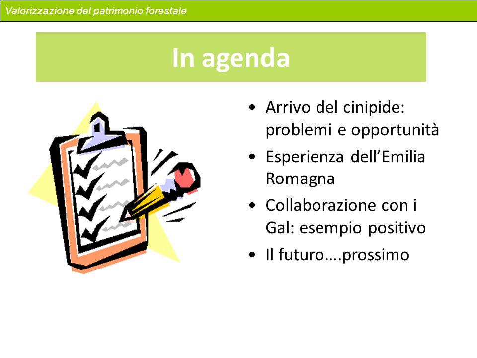 In agenda Arrivo del cinipide: problemi e opportunità