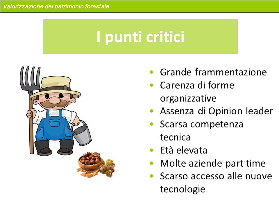 I punti critici Grande frammentazione Carenza di forme organizzative