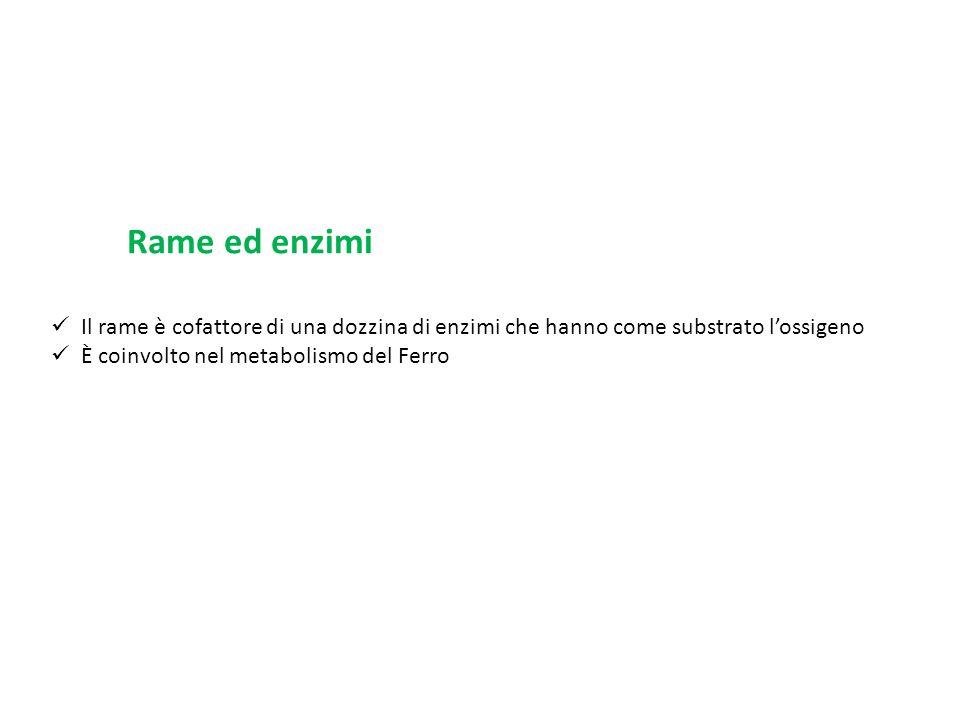 Rame ed enzimi Il rame è cofattore di una dozzina di enzimi che hanno come substrato l'ossigeno.