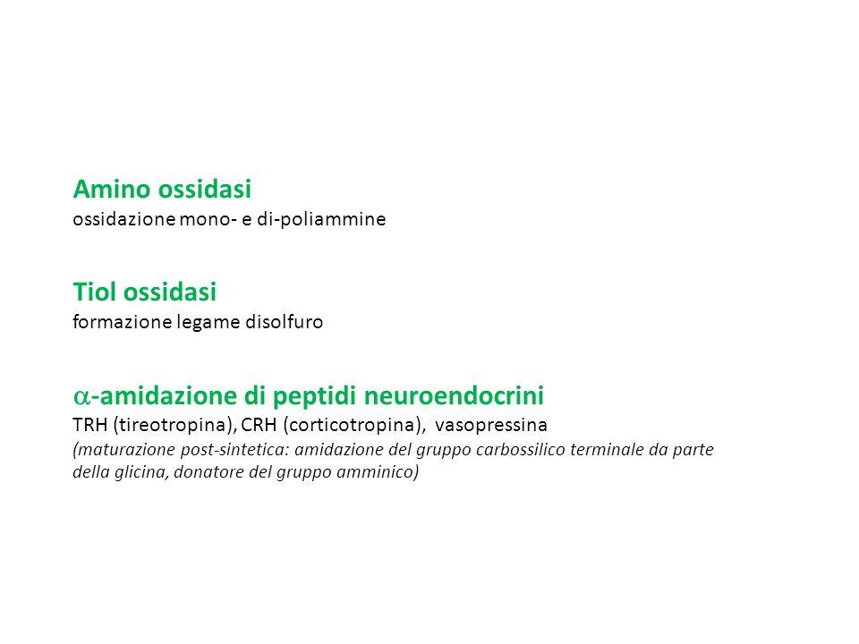 -amidazione di peptidi neuroendocrini
