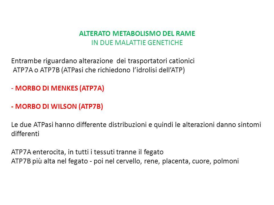 ALTERATO METABOLISMO DEL RAME IN DUE MALATTIE GENETICHE