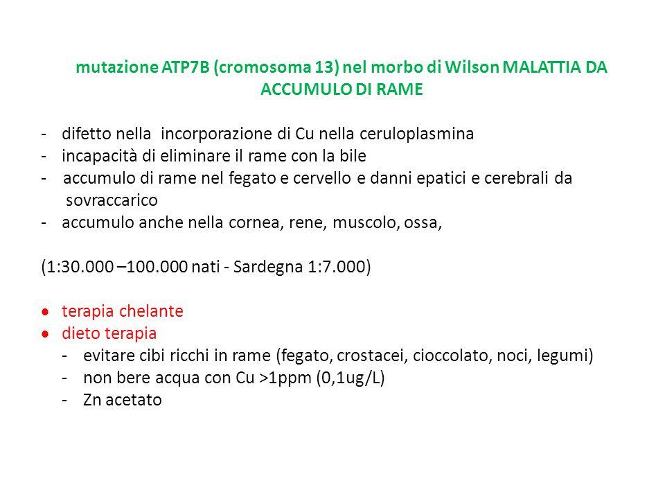 mutazione ATP7B (cromosoma 13) nel morbo di Wilson MALATTIA DA ACCUMULO DI RAME