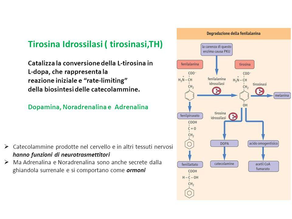 Tirosina Idrossilasi ( tirosinasi,TH)