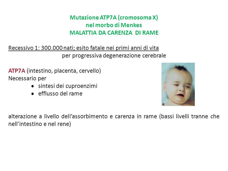 Mutazione ATP7A (cromosoma X) MALATTIA DA CARENZA DI RAME