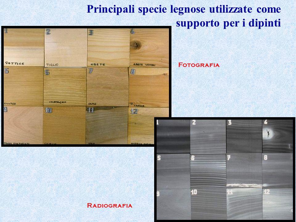 Principali specie legnose utilizzate come supporto per i dipinti