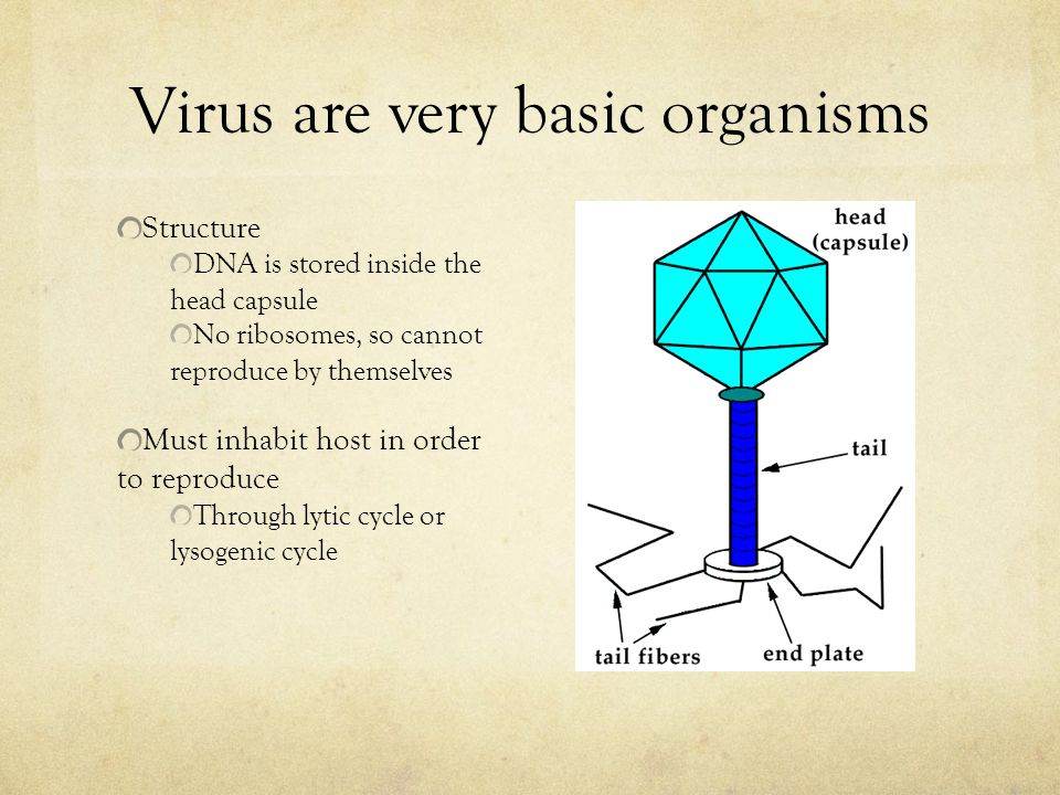 Virus are very basic organisms