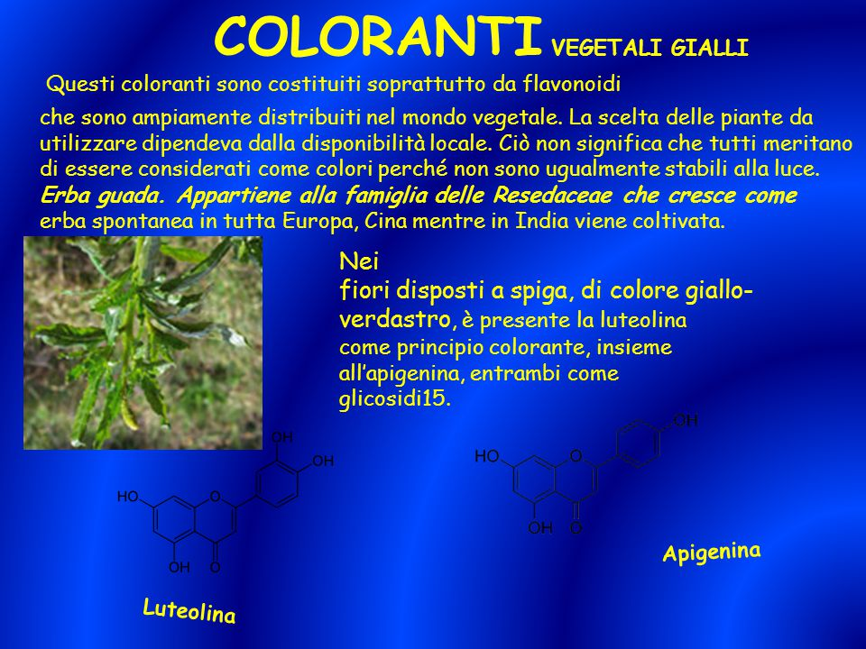 COLORANTI VEGETALI GIALLI