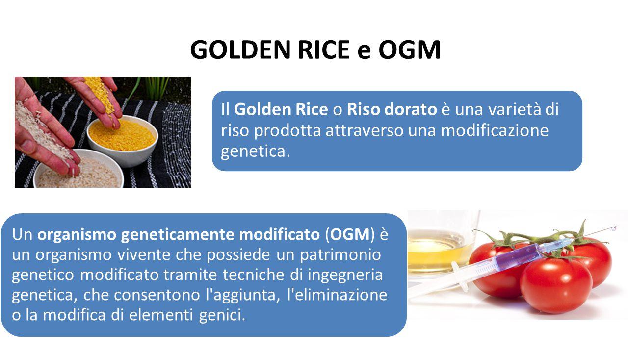 GOLDEN RICE e OGM Il Golden Rice o Riso dorato è una varietà di riso prodotta attraverso una modificazione genetica.