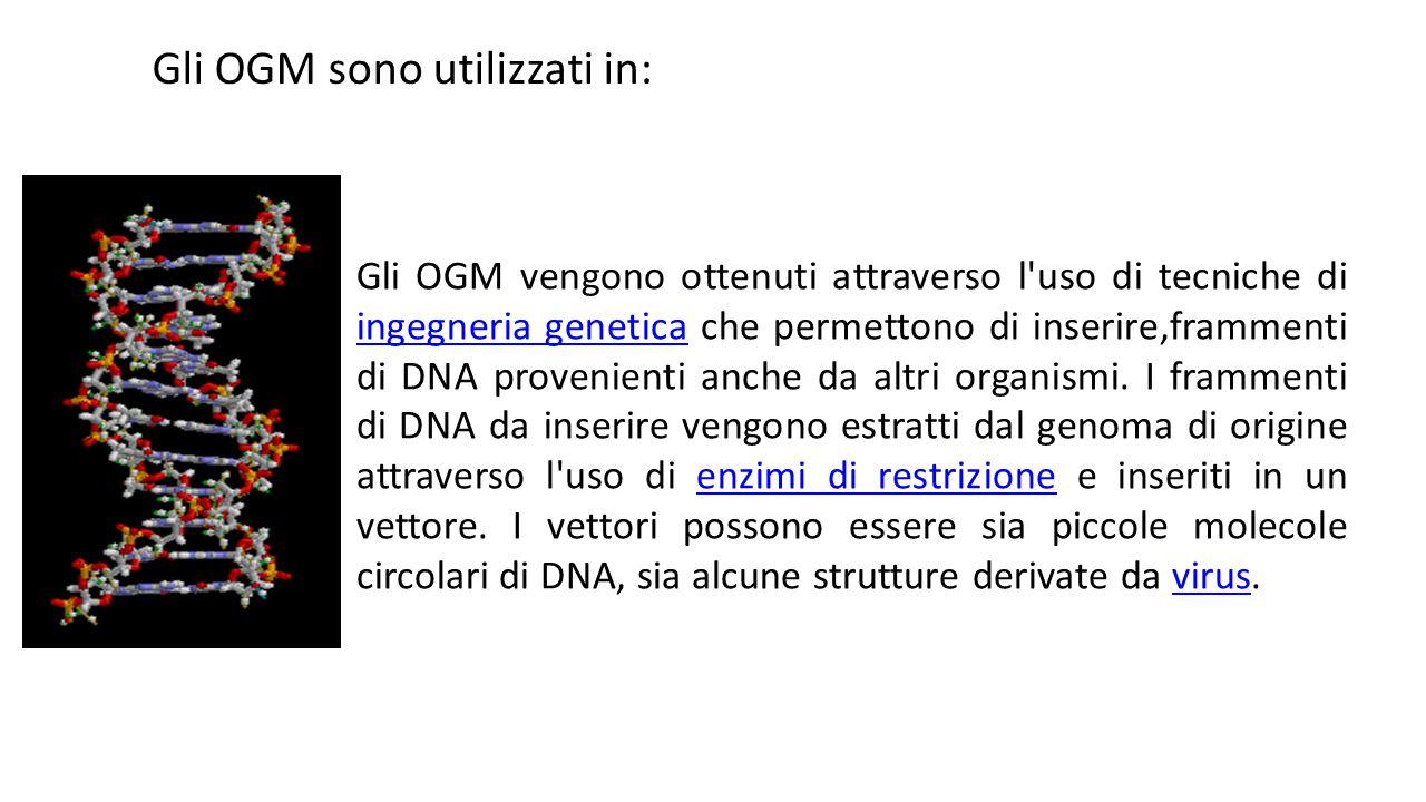 Gli OGM sono utilizzati in: