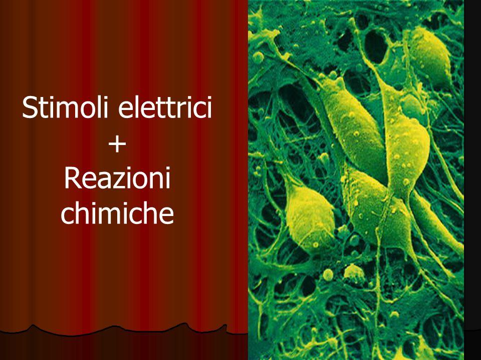 Stimoli elettrici + Reazioni chimiche