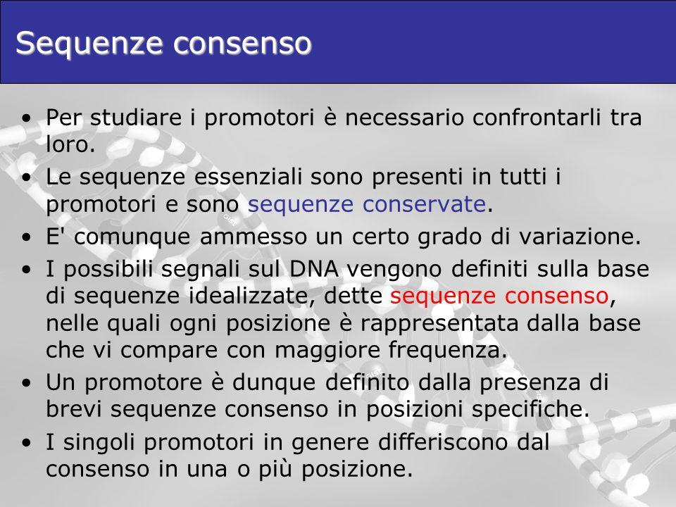 Sequenze consenso Per studiare i promotori è necessario confrontarli tra loro.