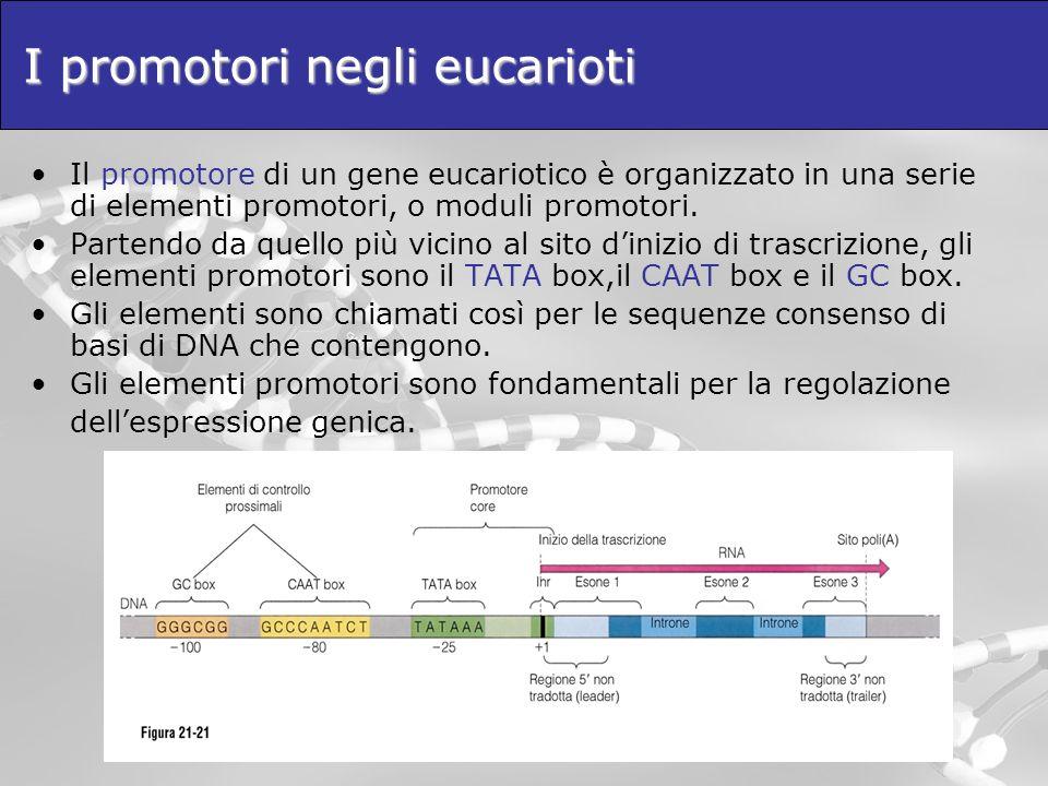 I promotori negli eucarioti