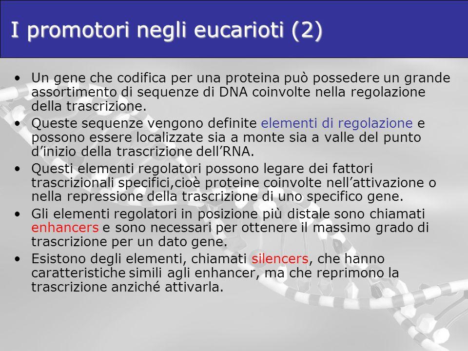 I promotori negli eucarioti (2)