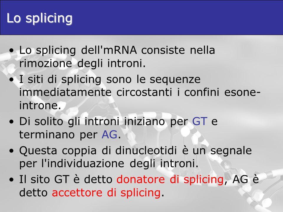 Lo splicing Lo splicing dell mRNA consiste nella rimozione degli introni.