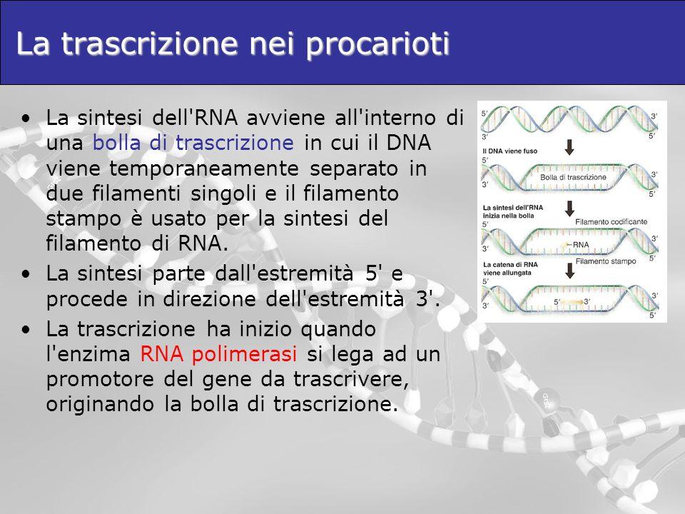 La trascrizione nei procarioti