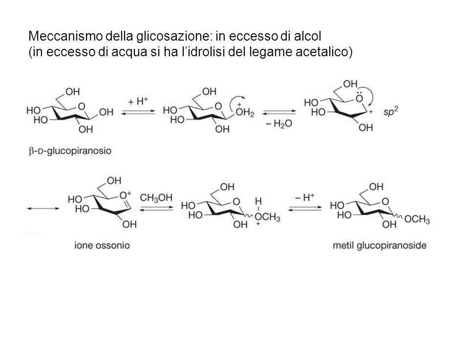 Meccanismo della glicosazione: in eccesso di alcol (in eccesso di acqua si ha l'idrolisi del legame acetalico)