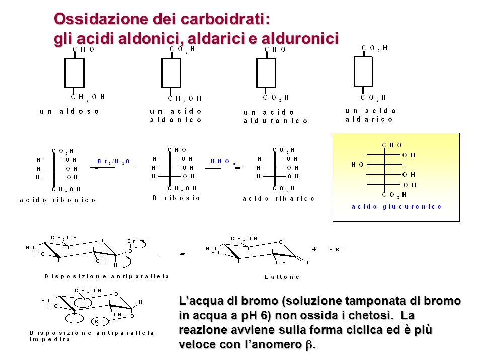 Ossidazione dei carboidrati: gli acidi aldonici, aldarici e alduronici