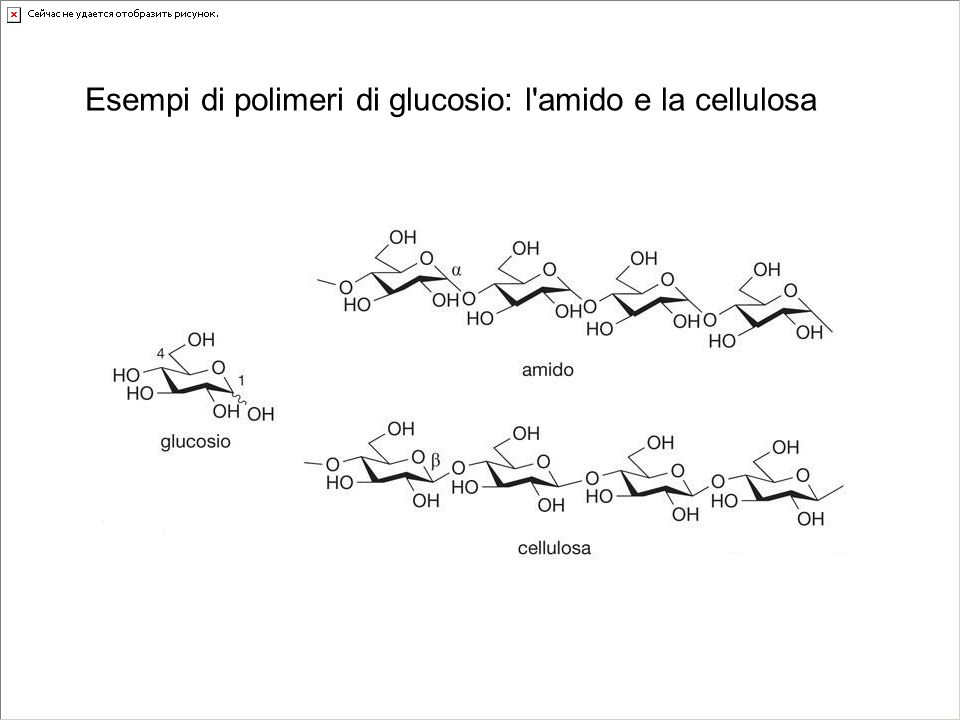Esempi di polimeri di glucosio: l amido e la cellulosa