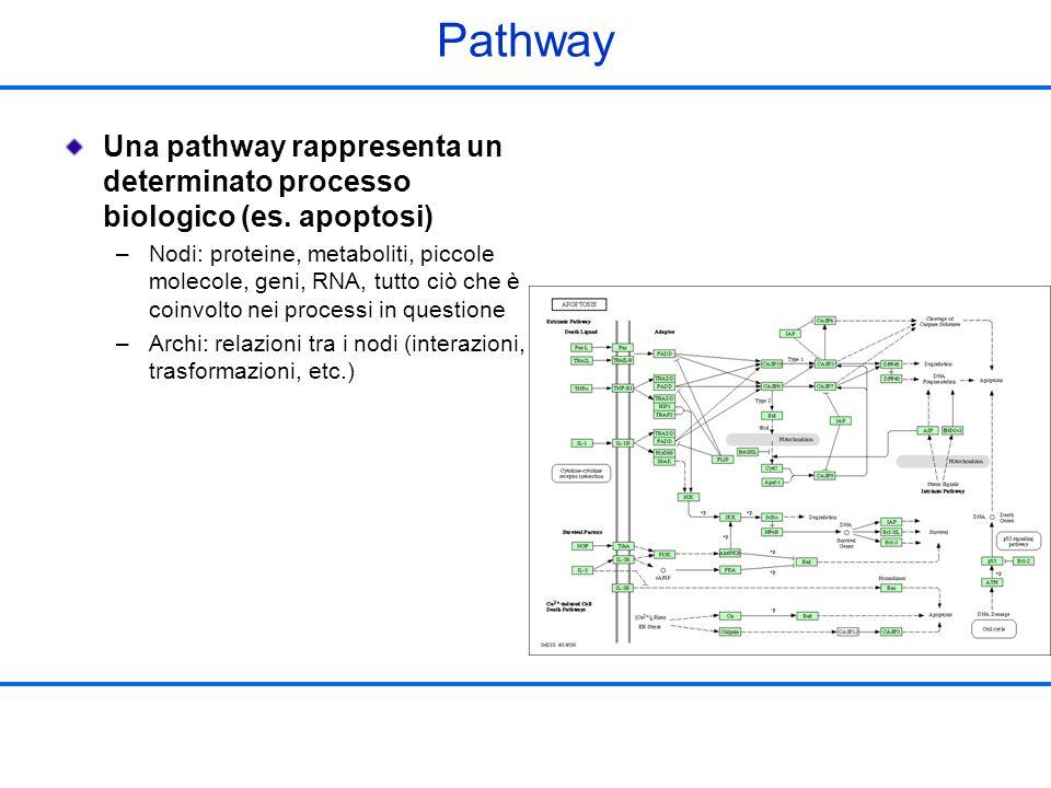 Pathway Una pathway rappresenta un determinato processo biologico (es. apoptosi)
