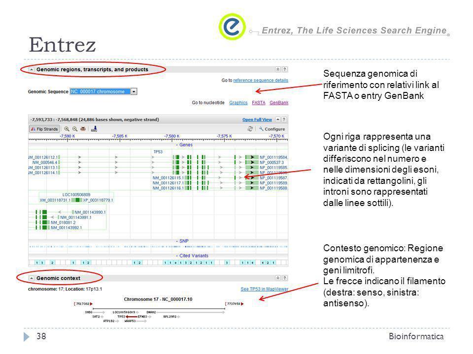 Entrez Sequenza genomica di riferimento con relativi link al FASTA o entry GenBank.