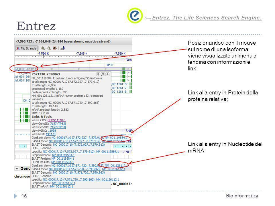 EntrezPosizionandoci con il mouse sul nome di una isoforma viene visualizzato un menu a tendina con informazioni e link;
