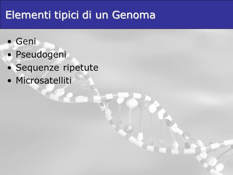 Elementi tipici di un Genoma