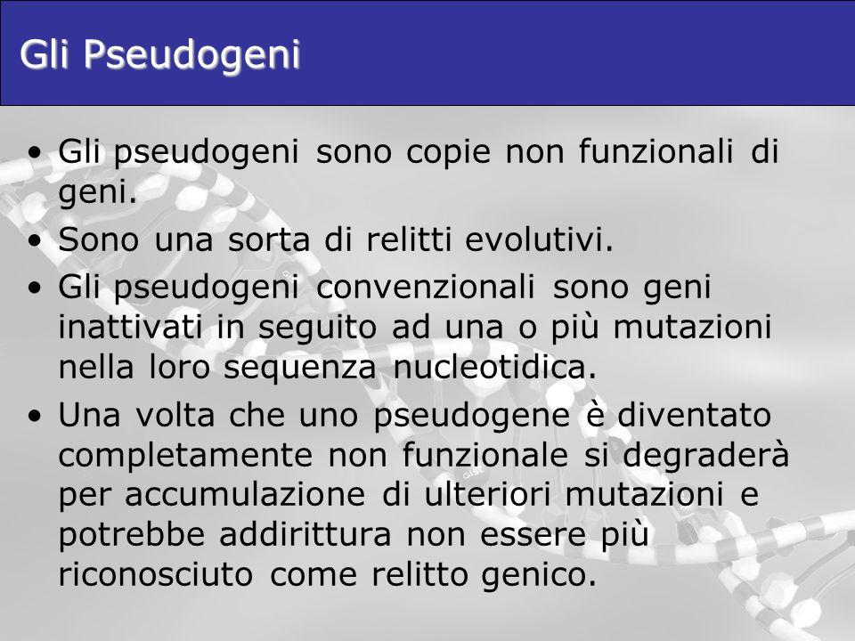 Gli Pseudogeni Gli pseudogeni sono copie non funzionali di geni.